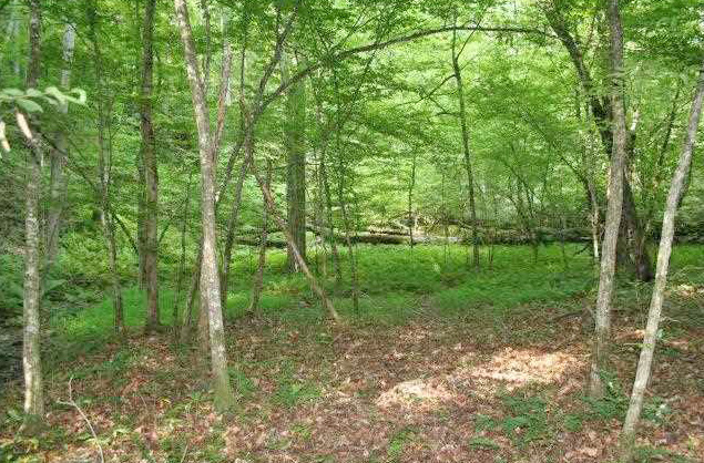 Dahlonega property with creek