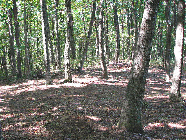 Ellijay land for sale with mountain view