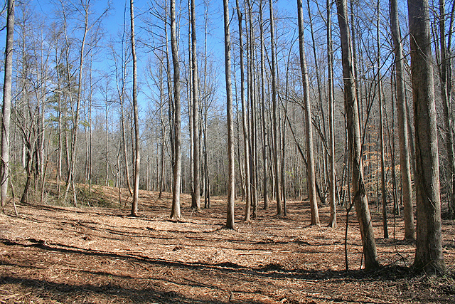 Land for sale Lumpkin County