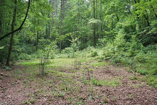 Dahlonega land for sale